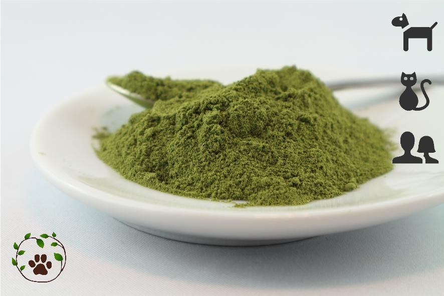 Bio Moringablätter gemahlen - eine Pflanze der Superlative
